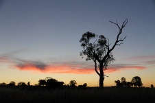 Farleigh Reserve - Sunset (NSW)
