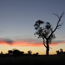 Farleigh Reserve - Sunset (NSW)