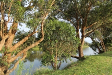 Marlo - Snowy River (Vic)