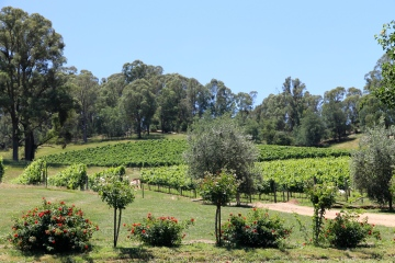 Bright - RInger Reef Winery (Vic)