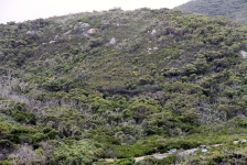 Wilsons Promontory - Find the Disco (Vic)