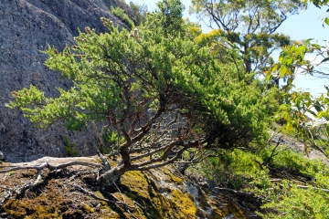 "Natural Bonsai - Pete said ""If only it wasn't a National Park!"" (Vic)"