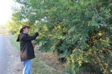 Brookes Cutting Reserve - Pete Collecting Bush Tucker (Vic)