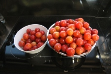 Brookes Cutting Reserve - Harvested Plums (Vic)