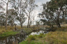 Tenterfield Creek (NSW)
