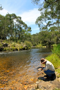 Tom Groggin Horse Camp - Still Panning For Gold (NSW)