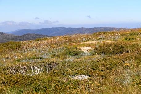 Mount Kosciuszko Return Journey (NSW)