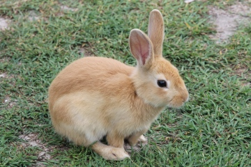 Shoal Bay - Rabbits (NSW)