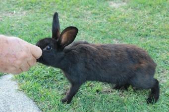 Shoal Bay - Hand Feeding The Rabbits (NSW)