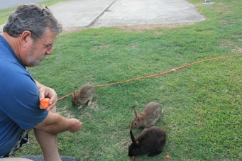 Shoal Bay - Hand Feeding The Rabbits (NSW)
