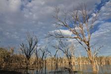 Lara Wetlands (Qld)