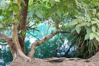 Adels Grove - Lawn Hill Creek (Qld)