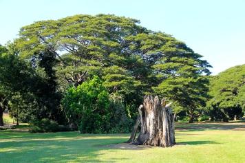 Darwin - Botanical Gardens (NT)