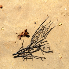 "Dundee Beach - ""Washed Up 1, Black Coral"" (NT)"