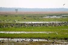 Water Birds - Fogg Dam (NT)