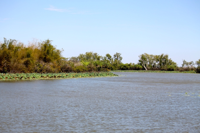 Corroboree Billabong (NT)
