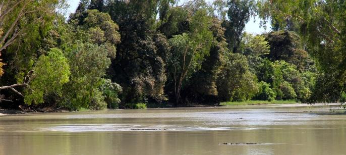 Saltwater Crocodiles - Cahill's Crossing - Kakadu (NT)