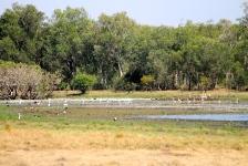 Anbangbang Billabong - Kakadu (NT)