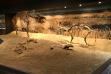 Araluen Precinct - Alcoota Fossils (NT)