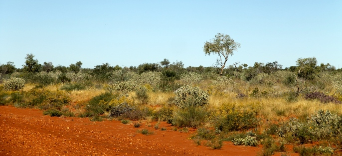 Murray Downs Road (NT)