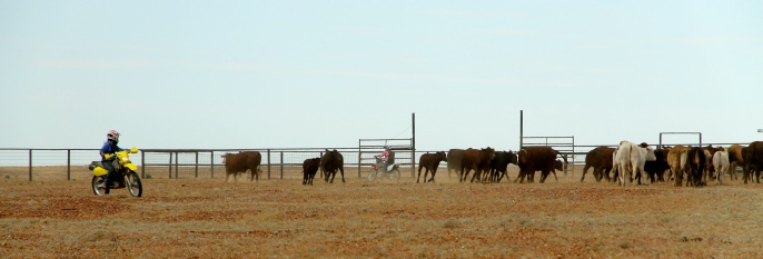 Anna Creek Station - Mustering (SA)