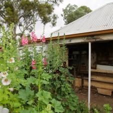Melrose - Hollyhock Garden (SA)