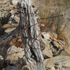 Hampton Township Ruins - 'Wired 1' (SA)