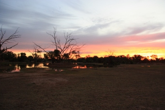 Bowra Wildlife Reserve - Sunrise (Qld)