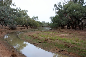 Bowra Wildlife Reserve - Saw Pit Waterhole (Qld)