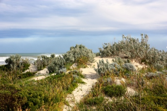 Brown Beach (SA)