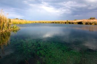 Ewens Ponds (SA)