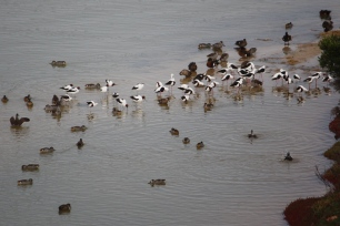 Beachport - Pool Of Siloam - Bird Spotting - Thank Goodness For Telephoto Lenses (SA)