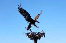 Balranald - Bird Watching Of A Different Kind (NSW)