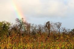 McLaren Vale - Angove Winery (SA)