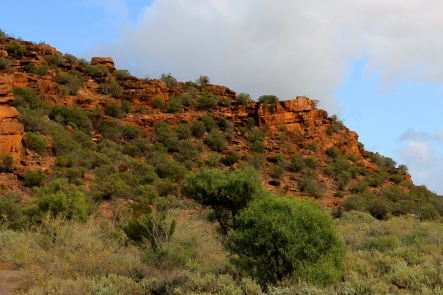 Whyalla Conservation Reserve - Wild Dog Hill (SA)