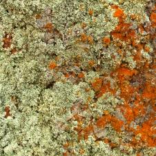 Kimba - White Knob Lookout - Rock Surface - 'Fungi 1' (SA)