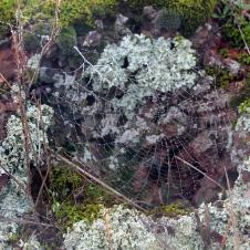 Kimba - White Knob Lookout - Morning Dew On 'Web 1' (SA)