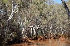 Gascoyne River South Branch - Waterhole (WA)