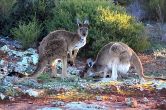 Fraser Range Station - Spectators - Nullarbor Links Golf Course (WA)
