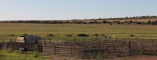 Coorabie Farm (SA)