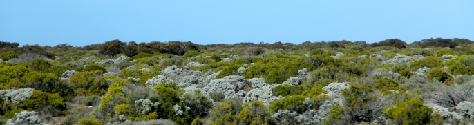 Nullarbor Plains - Flora (SA)