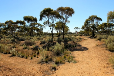 Balladonia Roadhouse - Nullarbor Links Golf Course (WA)