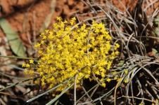 Wubin To Canna - Exploring Wildflower Country (WA)