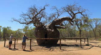 Derby - Prison Boab Tree (WA)
