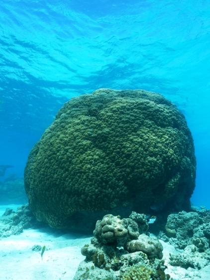 Ningaloo Whale Shark Tour - Coral (WA)