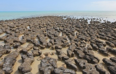 Hamelin Pool - Stromatolites (WA)