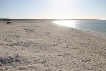 Shell Beach (WA)