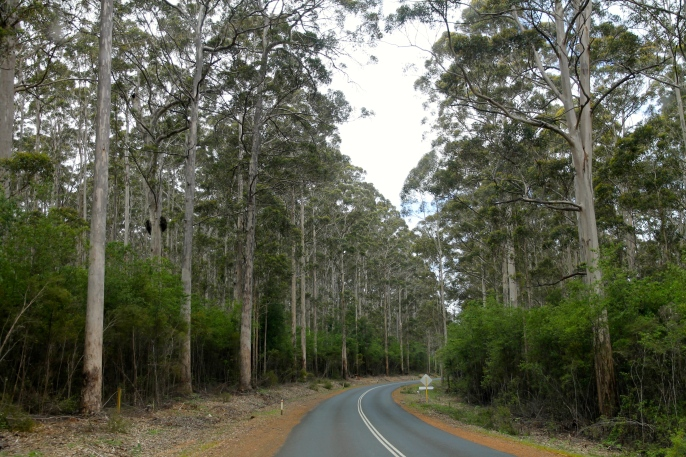 Karri Forests (WA)