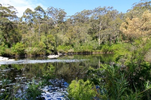 Walpole Wilderness Area - Circular Pool, Frankland River (WA)