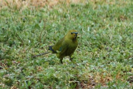 Elegant Parrot - Maranup Ford Farm Stay (WA)